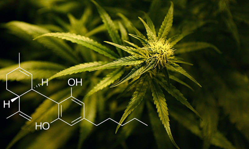 Is It Legal to Mail CBD Oil?