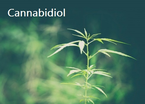 "Study: Cannabidiol Can Help ""Reset"" Brain In Psychosis"