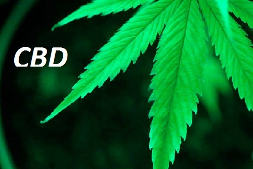 CBD Oil: What You Need to Know