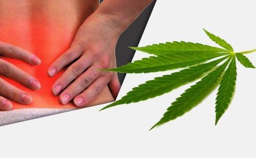 CBD Oil for Chronic Pain Relief: Does it Work?