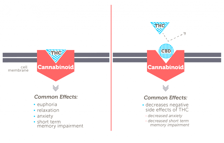 Why Is CBD Not Psychoactive?