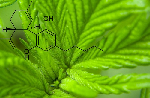 What Is CBD? Here's What to Know About Cannabidiol