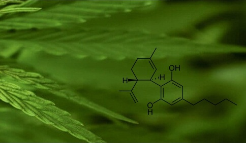 CBD: What is it and how can it help you?