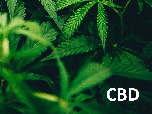 What Is CBD Oil and Why Do People Take It?