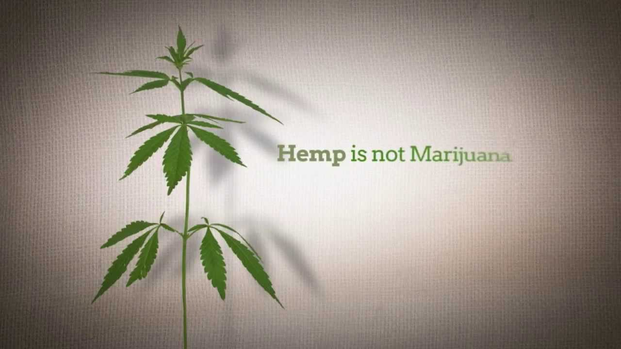 8 COMMON MISCONCEPTIONS ABOUT INDUSTRIAL HEMP